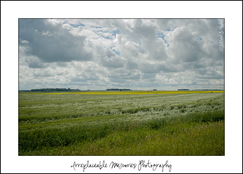 Red Deer Olds Central Alberta Photographer - Irreplaceable Memories Photography - Imphoto Blog Photo 20140720-_D208621